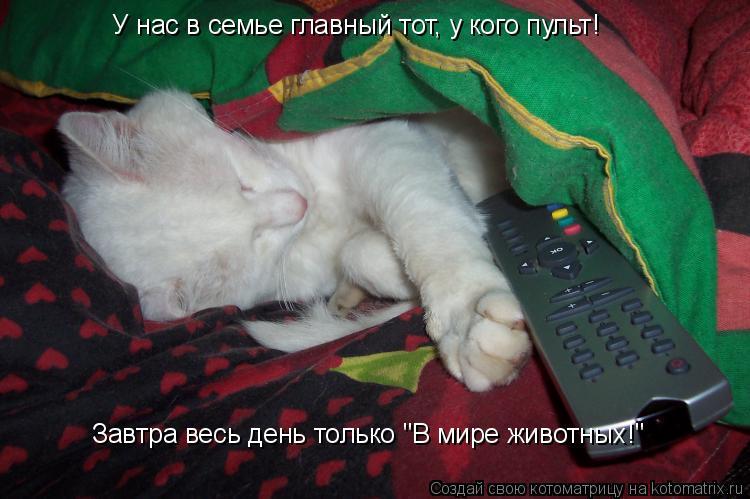 """Котоматрица: У нас в семье главный тот, у кого пульт! Завтра весь день только """"В мире животных!"""""""