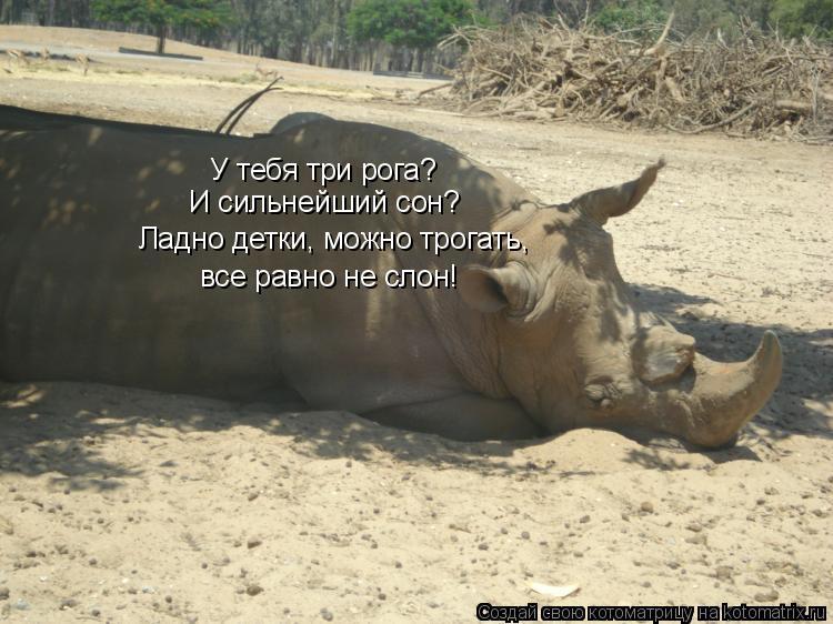 Котоматрица: У тебя три рога? И сильнейший сон? Ладно детки, можно трогать, все равно не слон!