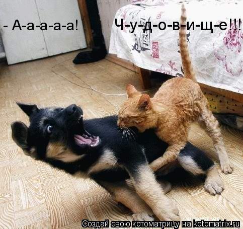 Котоматрица: Ч-у-д-о-в-и-щ-е!!! - А-а-а-а-а!