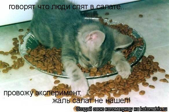 Котоматрица: говорят что люди спят в салате... провожу эксперимент, жаль салат не нашел!
