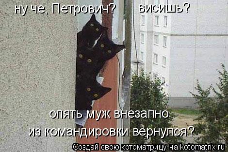 Котоматрица: ну че, Петрович? висишь? опять муж внезапно  из командировки вернулся?