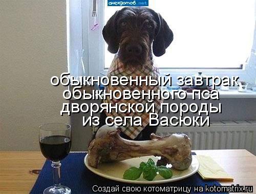 Котоматрица: из села Васюки дворянской породы обыкновенного пса  обыкновенный завтрак