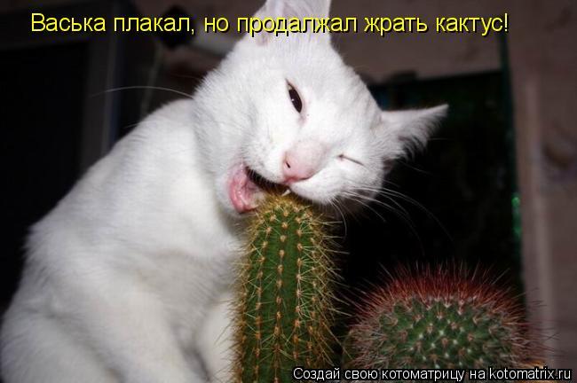 Котоматрица: Васька плакал, но продалжал жрать кактус!
