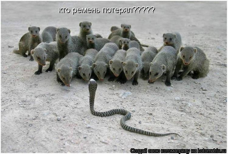 Котоматрица: кто ремень потерял?????