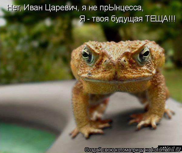 Котоматрица: Hет, Иван Царевич, я не прЫнцесса, Я - твоя будущая ТЕЩА!!!