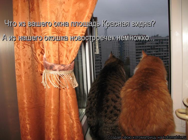 Котоматрица: Что из вашего окна площадь Красная видна? А из нашего окошка новостроечек немножко...