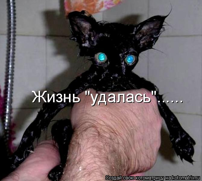 "Котоматрица: Жизнь ""удалась""......"