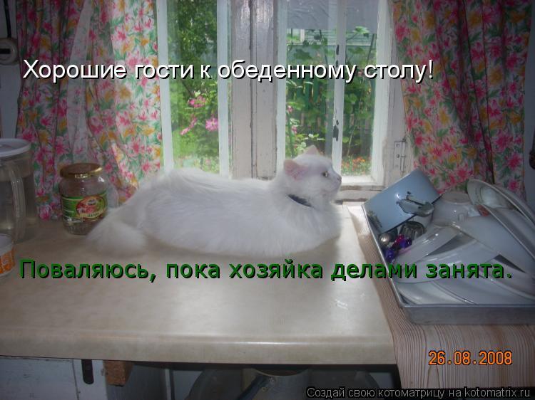 Котоматрица: Хорошие гости к обеденному столу! Поваляюсь, пока хозяйка делами занята.