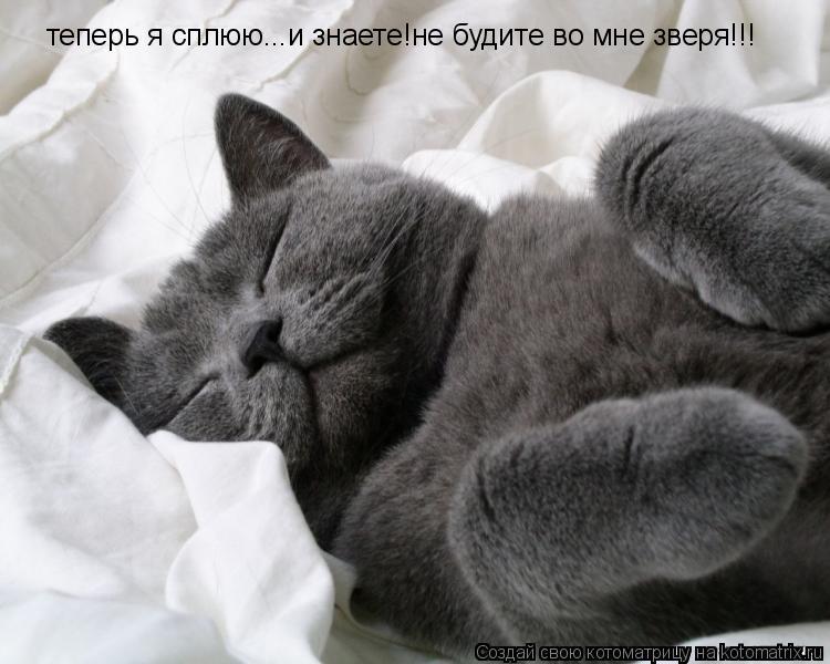 Котоматрица: теперь я сплюю...и знаете!не будите во мне зверя!!!