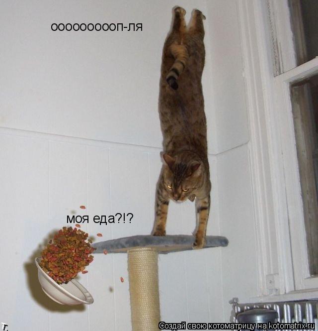 Котоматрица: оооооооооп-ля моя еда?!?