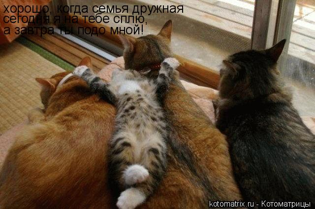 Котоматрица: хорошо, когда семья дружная сегодня я на тебе сплю, а завтра ты подо мной!