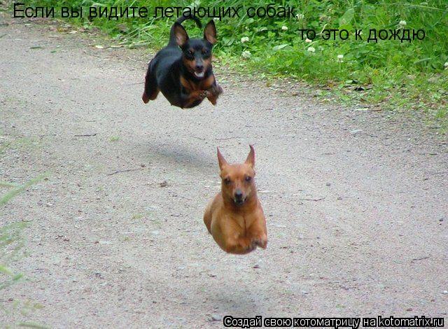 Котоматрица: Если вы видите летающих собак,  то это к дождю