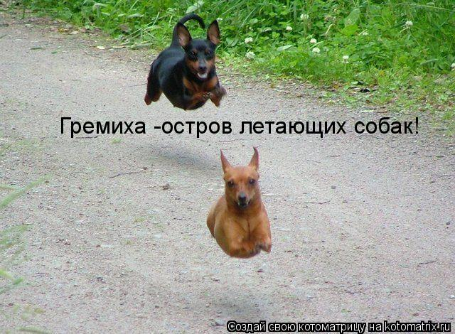 Котоматрица: Гремиха -остров летающих собак!