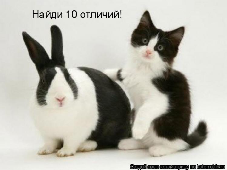 Котоматрица: Найди 10 отличий!