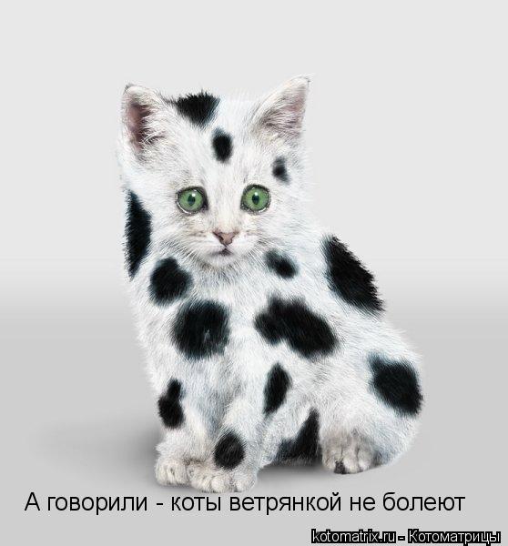 Котоматрица: А говорили - коты ветрянкой не болеют