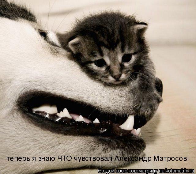 Котоматрица: теперь я знаю ЧТО чувствовал Александр Матросов!