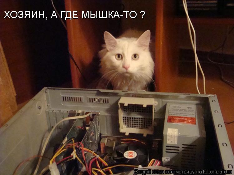Котоматрица: ХОЗЯИН, А ГДЕ МЫШКА-ТО ?