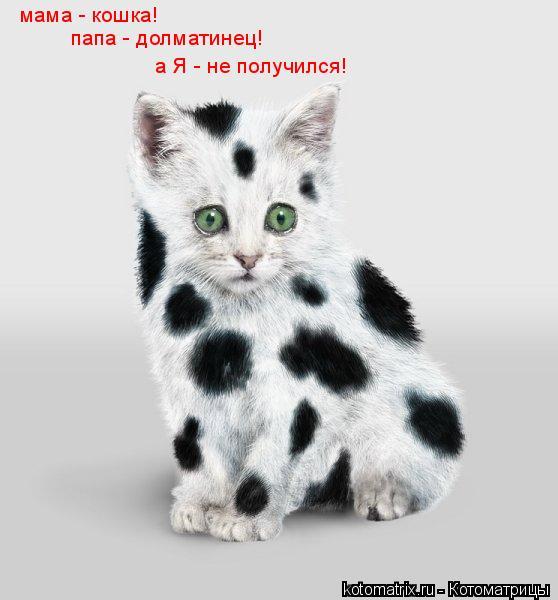 Котоматрица: мама - кошка!  папа - долматинец! а Я - не получился!