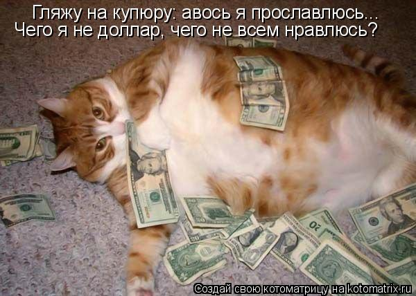 Котоматрица: Гляжу на купюру: авось я прославлюсь...  Чего я не доллар, чего не всем нравлюсь?