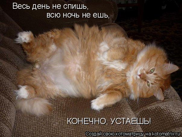 Котоматрица: Весь день не спишь, всю ночь не ешь, КОНЕЧНО, УСТАЕШЬ!