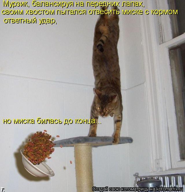 Котоматрица: Мурзик, балансируя на передних лапах, своим хвостом пытался отвесить миске с кормом ответный удар, но миска билась до конца...