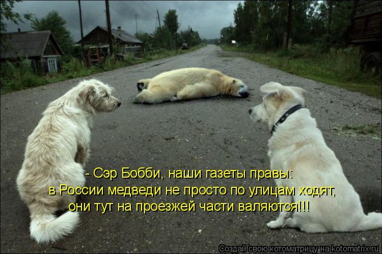 Котоматрица: - Сэр Бобби, наши газеты правы: в России медведи не просто по улицам ходят, они тут на проезжей части валяются!!!