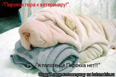 """Котоматрица: -""""Пирожок пора к ветеринару!"""" -""""я полотенце,Пирожка нет!!!"""""""