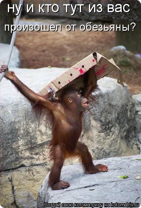 Котоматрица: ну и кто тут из вас произошел от обезьяны?