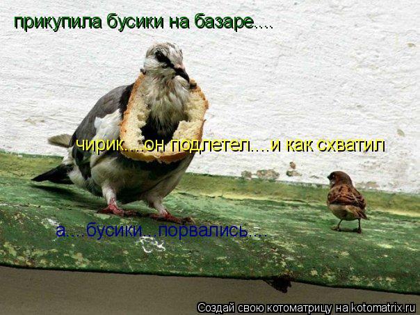Котоматрица: прикупила бусики на базаре.... чирик....он подлетел....и как схватил  а....бусики...порвались....