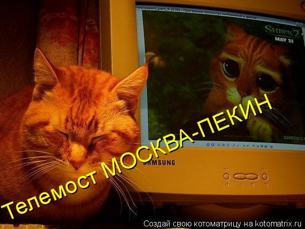 Котоматрица: Телемост МОСКВА-ПЕКИН