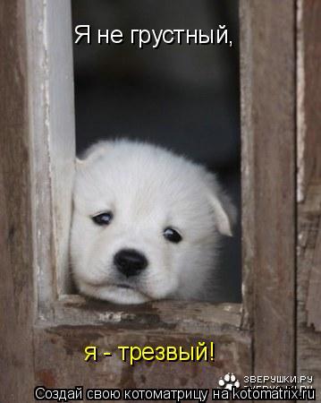 Котоматрица: Я не грустный, я - трезвый!