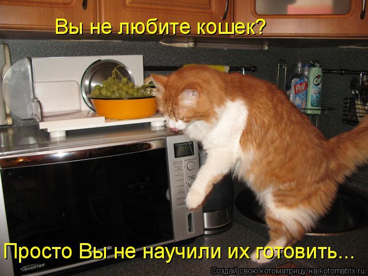 Котоматрица: Вы не любите кошек? Просто Вы не научили их готовить...