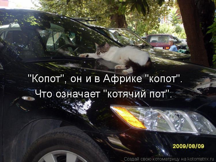 """Котоматрица: """"Копот"""", он и в Африке """"копот"""".  Что означает """"котячий пот""""."""