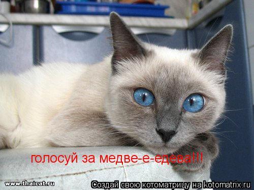 Котоматрица: голосуй за медве-е-едева!!!
