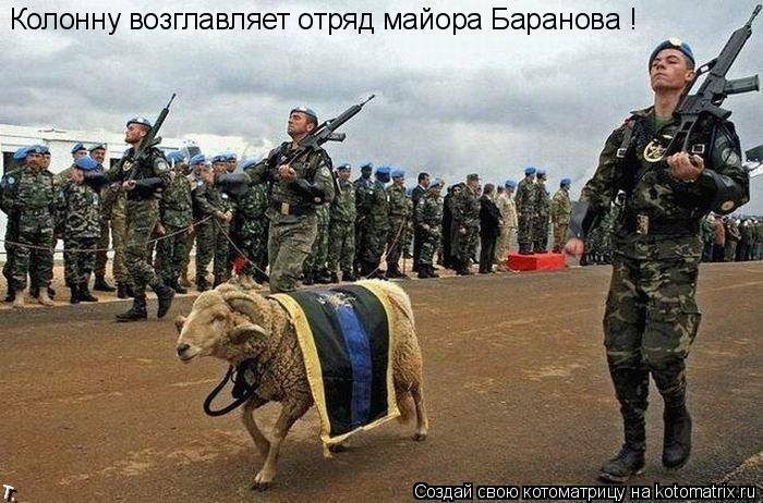 Котоматрица: Колонну возглавляет отряд майора Баранова !