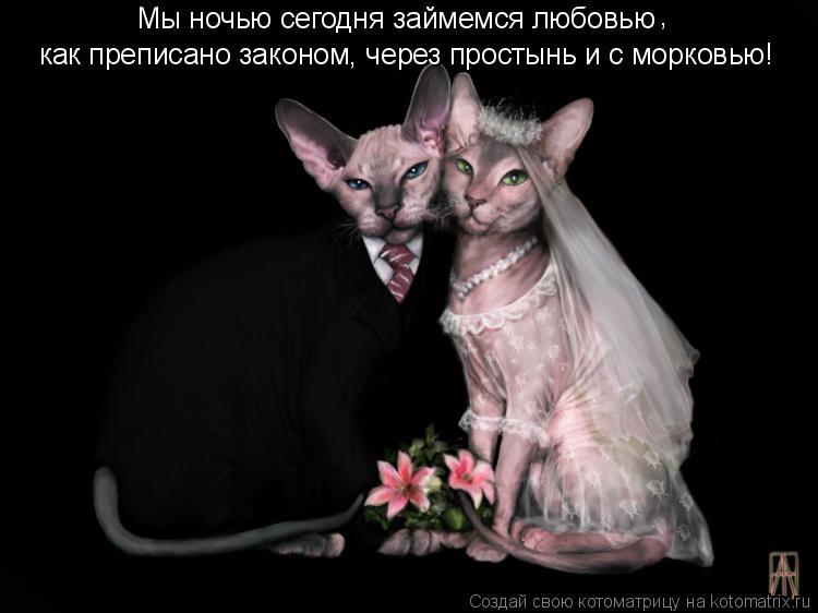 Котоматрица: Мы ночью сегодня займемся любовью как преписано законом, через простынь и с морковью! ,