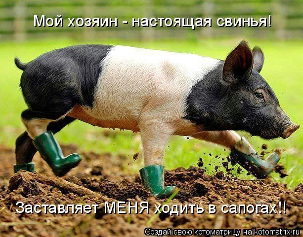 Котоматрица: Мой хозяин - настоящая свинья! Заставляет МЕНЯ ходить в сапогах!!