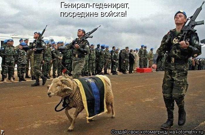 Котоматрица: Генирал-геденират,  посредине войска!