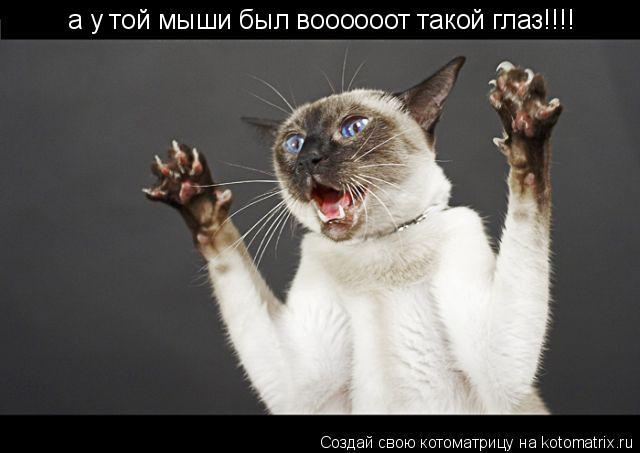 Котоматрица: а у той мыши был воооооот такой глаз!!!!