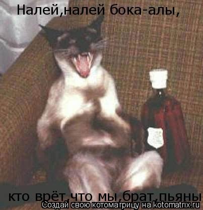Котоматрица: Налей,налей бока-алы, кто врёт,что мы,брат,пьяны!