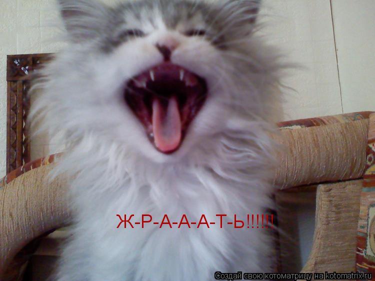 Котоматрица: Ж-Р-А-А-А-Т-Ь!!!!!!