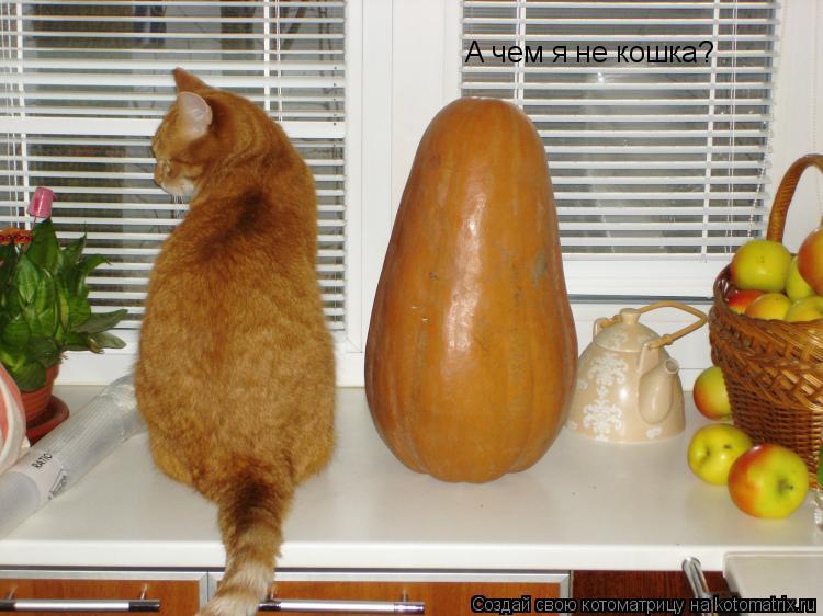 Котоматрица: А чем я не кошка?
