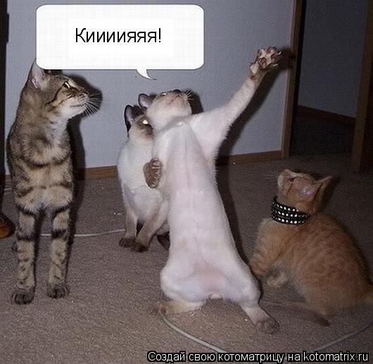 Котоматрица: Киииияяя!