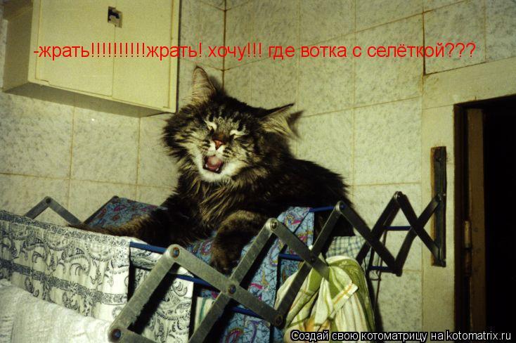 Котоматрица: -жрать!!!!!!!!!!жрать! хочу!!! где вотка с селёткой???