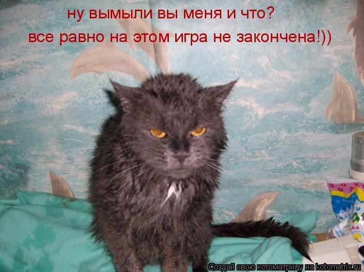 Котоматрица: ну вымыли вы меня и что? все равно на этом игра не закончена!))