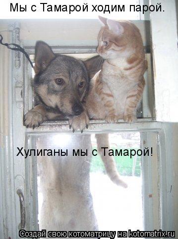 Котоматрица: Мы с Тамарой ходим парой. Хулиганы мы с Тамарой!