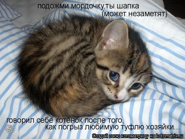 Котоматрица: подожми мордочку,ты шапка говорил себе котёнок после того, как погрыз любимую туфлю хозяйки... (может незаметят)