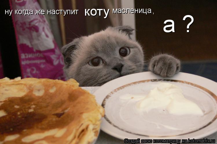 Котоматрица: ну когда же наступит  коту  масленица а ? ,