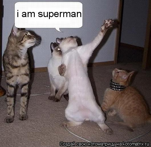Котоматрица: i am superman