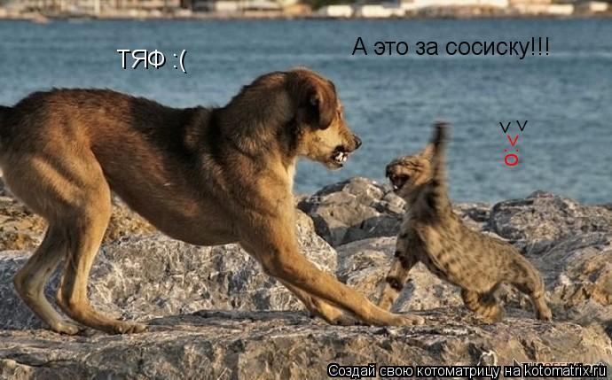 Котоматрица: ТЯФ :( А это за сосиску!!! > > >:o